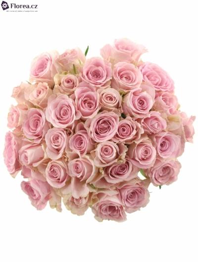 Kytice 35  růžových růží BABYFACE 50cm