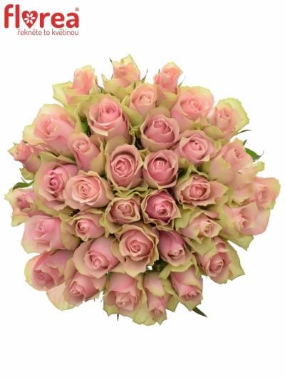 Kytice 35 růžových růží BELLE ROSE 40cm