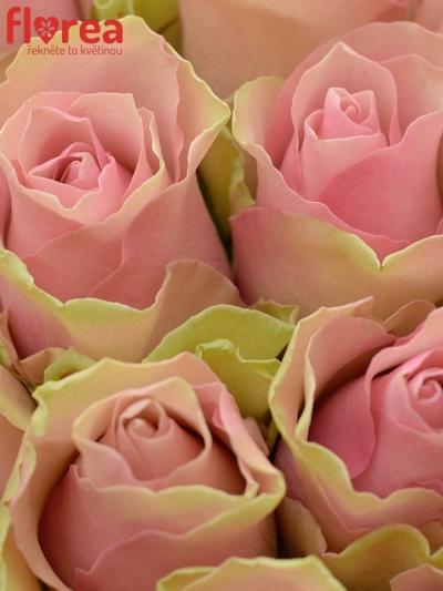 Kytice 35 růžových růží BELLE ROSE 50cm
