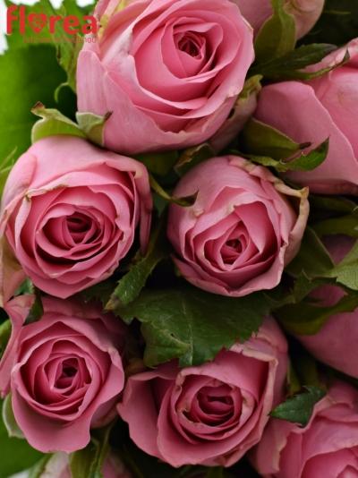 Kytice 35 růžových růží ELIZA 50cm