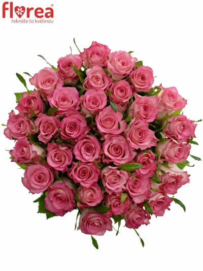 Kytice 35 růžových růží ENSEMBLE 50cm