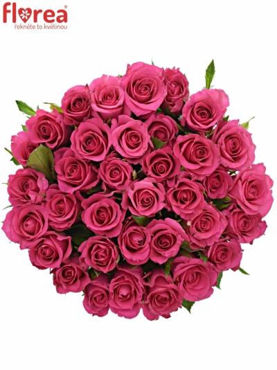 Kytice 35 růžových růží FRISBEE 60cm