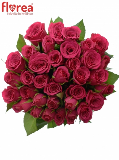 Kytice 35 růžových růží FUCHSIANA 60cm