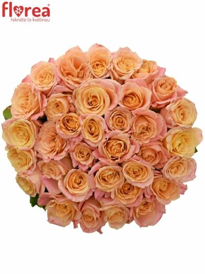 Kytice 35 růžových růží MISS PIGGY