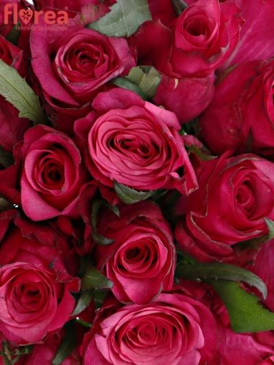 Kytice 35 růžových růží NATURES WILD