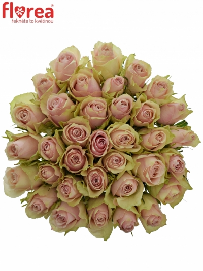 Kytice 35 růžových růží PINK ATHENA 50cm