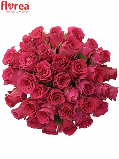 Kytice 35 růžových růží Pink Rhodos 40cm