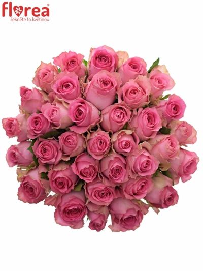 Kytice 35 růžových růží SHANGHAI LADY 50cm