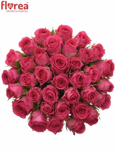 Kytice 35 růžových růží WINK 60 cm