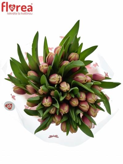 Kytice 35 růžových tulipánů LIFESTYLE 40cm