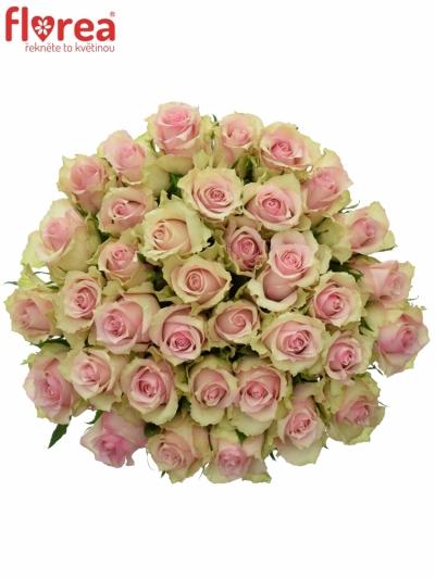 Kytice 35 smetanových růží DREAMLAND 60cm