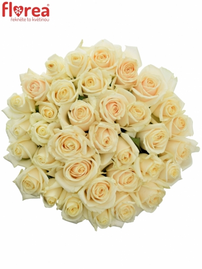 Kytice 35 smetanových růží VENDELA