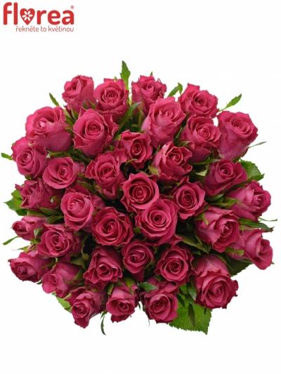 Kytice 35 vínových růží ORCHESTRA 40cm