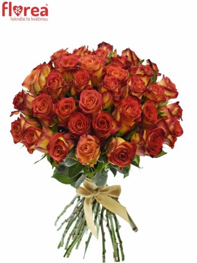 Kytice 35 žíhaných růží CATCH