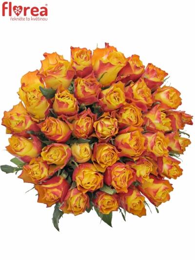 Kytice 35 žíhaných růží DOWNTOWN!