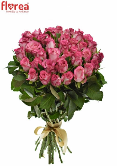 Kytice 35 žíhaných růží N-JOY 70cm