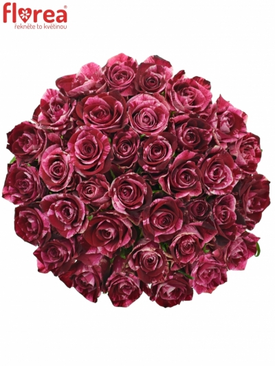 Kytice 35 žíhaných růží RED STORM
