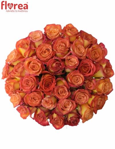 Kytice 35 žíhaných růží UTOPIA