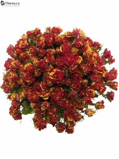 Kytice 35 žíhaných trsových růží FIRE FLASH 40cm