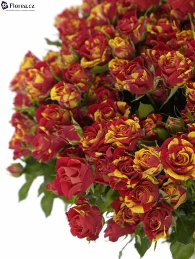 Kytice 35 žíhaných trsových růží FIRE FLASH