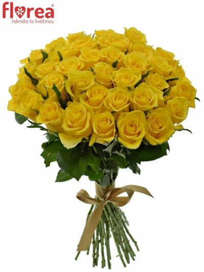 Kytice 35 žlutých růží MOONWALK 50 cm