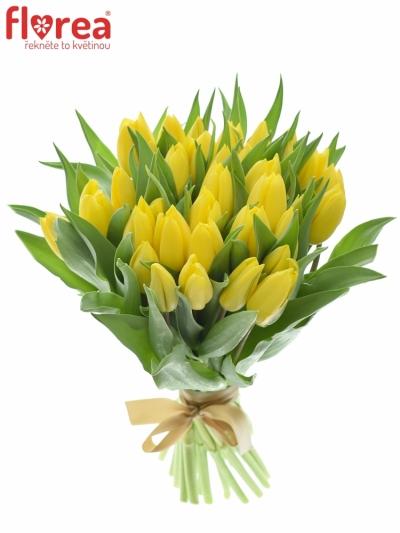 Kytice 35 žlutých tulipánů STRONG GOLD