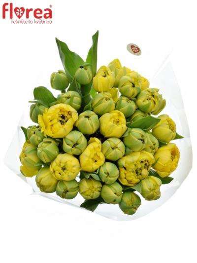 Kytice 35 žlutých tulipánů YELLOW POMPENE 38cm