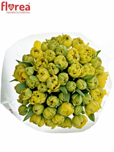 Kytice 50 žlutých tulipánů YELLOW POMPENE 38cm