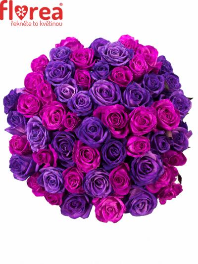 Kytice 55 barvených růží ABDERA