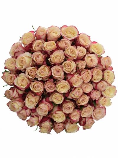 Kytice 55 bílorůžových růží ADVANCE SWEETNESS 40cm