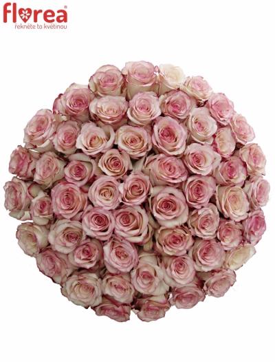 Kytice 55 bÍlorůžových růží TORMENTA