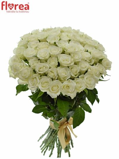 Kytice 55 bílých růží ASPEN 40cm