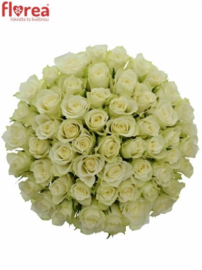 Kytice 55 bílých růží ATHENA 50cm