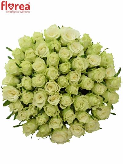 Kytice 55 bílých růží MURU 40 cm