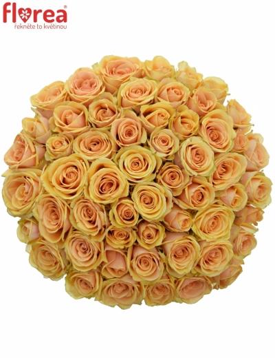 Kytice 55 čajových růží ALCHEMY