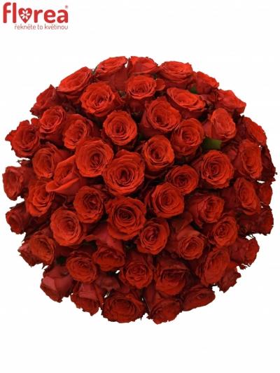 Kytice 55 červených růží BRIGHT TORCH 35cm
