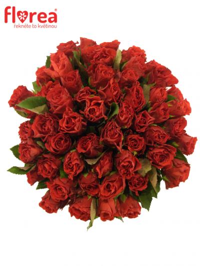 Kytice 55 červených růží EL TORO 30cm