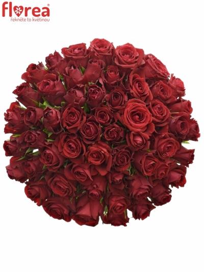 Kytice 55 červených růží FURIOSA 50cm