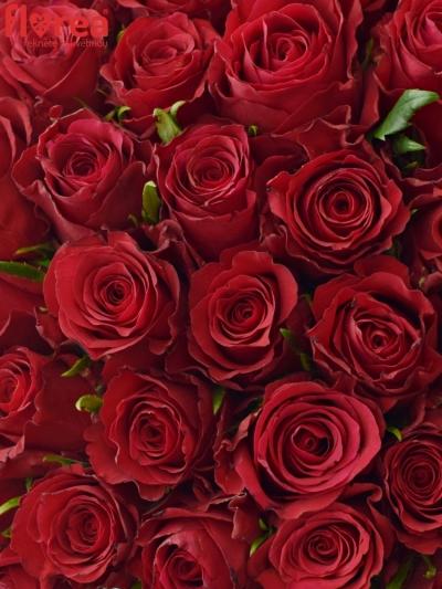 Kytice 55 červených růží NATURES RED