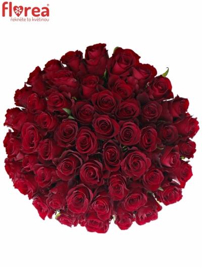 Kytice 55 červených růží NAZCA 50cm