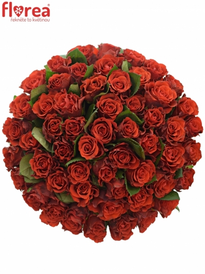 Kytice 55 červených růží RED CORVETTE 60cm