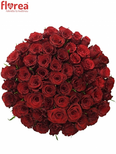 Kytice 55 červených růží RED DRAGON 60cm