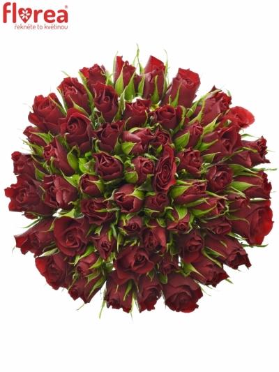 Kytice 55 červených růží VALENTINO 40cm