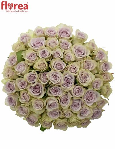 Kytice 55 fialových růží FIFTH AVENUE! 40cm