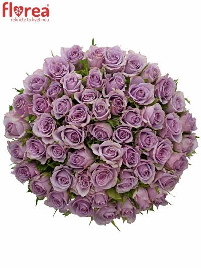 Kytice 55 fialových růží JAZZ 40cm