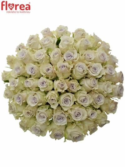 Kytice 55 fialových růží RAIN DANCE! 50cm