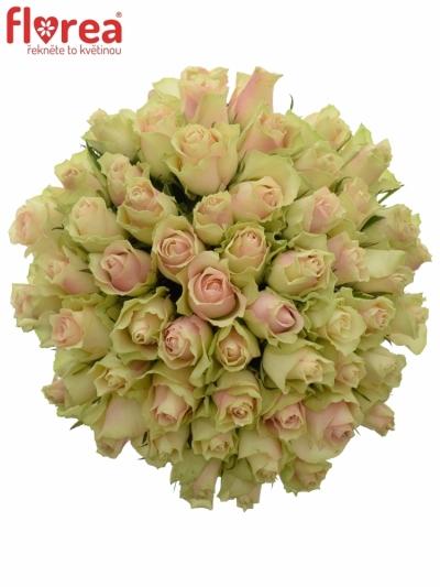 Kytice 55 krémovozelených  růží LA BELLE 50cm