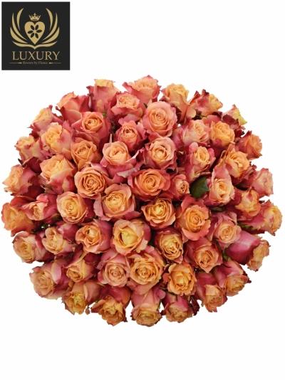 Kytice 55 luxusních růží 3D 70cm