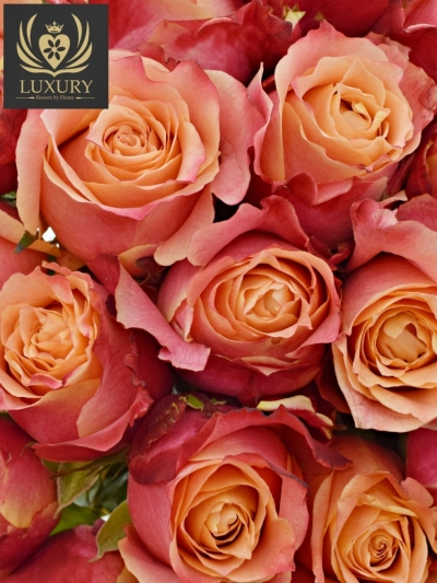 Kytice 55 luxusních růží 3D 80cm