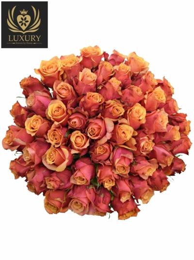 Kytice 55 luxusních růží CHERRY BRANDY 70cm